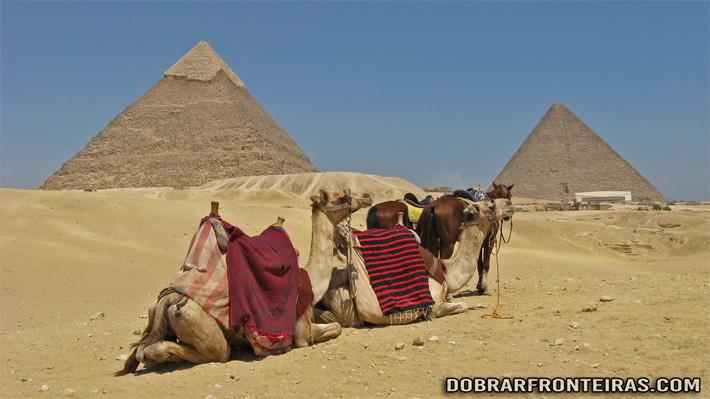 Camelos junto às pirâmides de Gize no Egipto