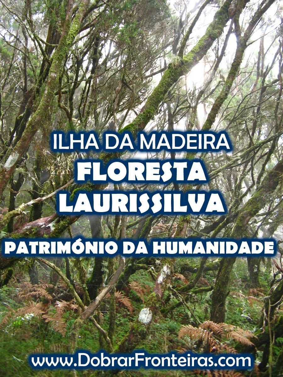 Floresta Laurissilva na Ilha da Madeira