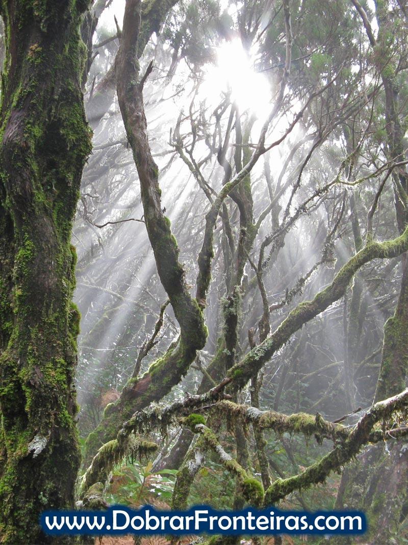 A magia da floresta Laurissilva na ilha da Madeira