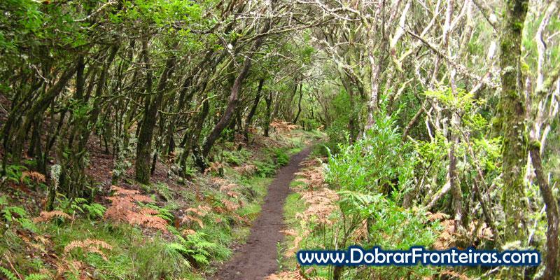 Trilho da vereda da Encomeada, envolto em floresta
