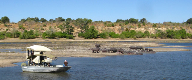 Hipopótamos, Parque de Chobe, Botswana