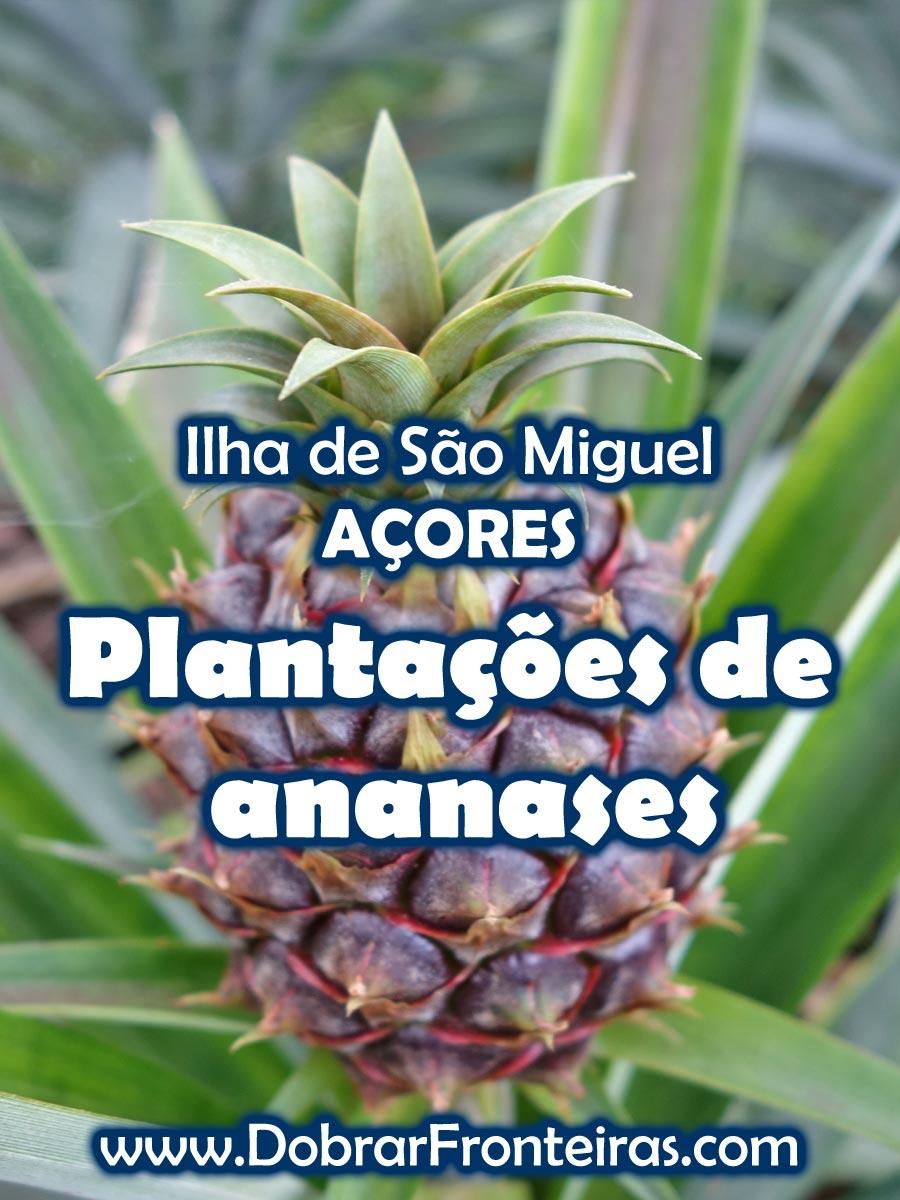 Plantações de ananases nos Açores