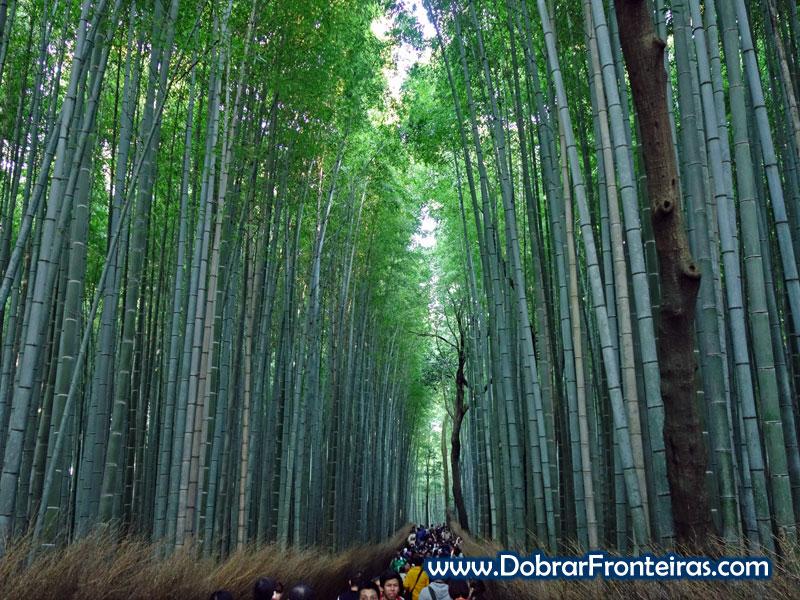 bamboo-quioto-1