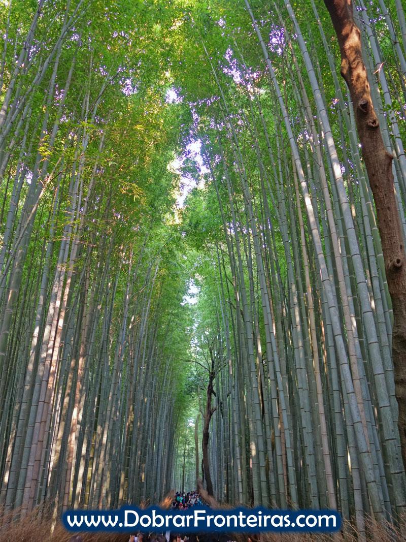 bamboo-quioto-2