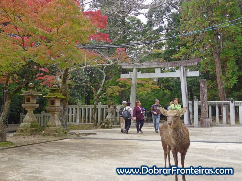 Pequeno cervo no parque de Nara